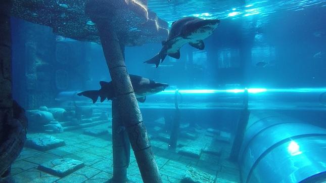 Tiburones Poema del Mar